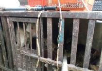 В Самаре собак убивали на мясо