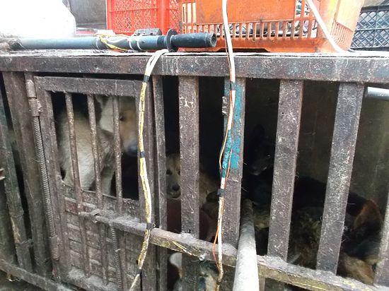 Бездушные люди вСамаре держат нелегальный цех позабою собак намясо