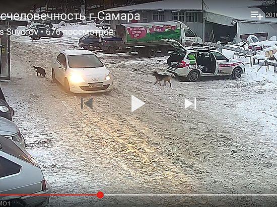 ВСамаре автомобиль переехал собаку иуехал дальше— Шокирующее видео