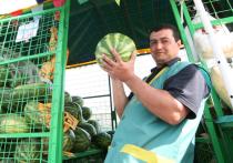 Где купить арбуз в Москве: появилась карта бахчевых развалов
