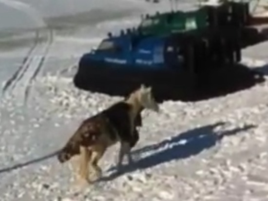 В Самаре спасатели вытаскивали провалившуюся под лед на Волге лошадь