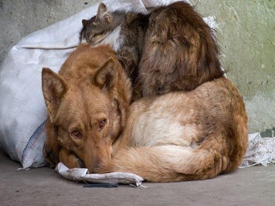 В Самарской области власти будут поддерживать приюты для бездомных животных